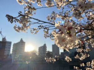 東京の桜・花見・2020「目黒川に沿って中目黒駅から不動前駅 vol.1」