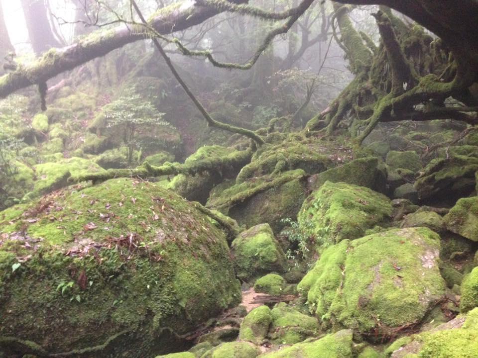 リアル「もののけ姫」の世界/カラスは飼えるか vol.1/屋久島の思い出 | Furublog