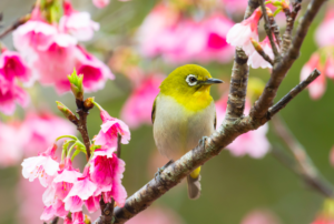 花が美しい理由【春の林試の森公園・散策】